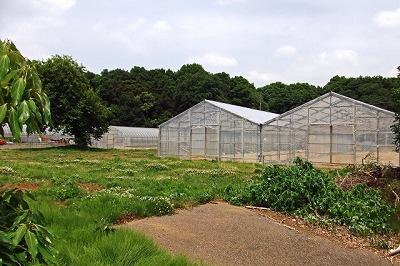 農業用ハウス